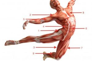 קורס גוף האדם
